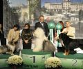 MISS 2� Best In Show Insubria Winner